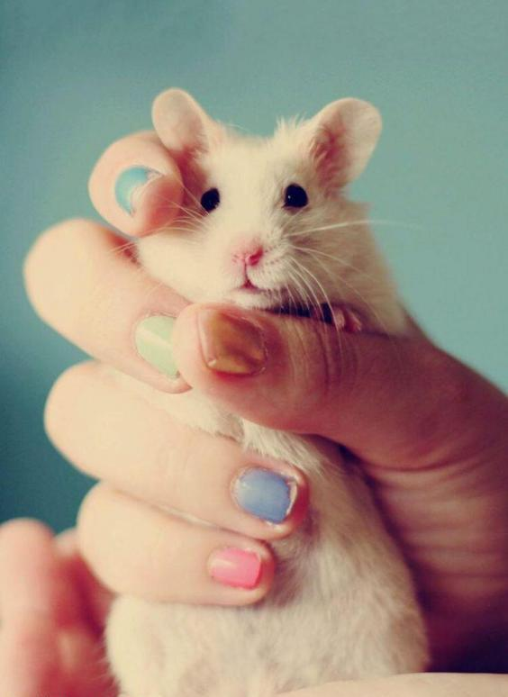 عکس پروفایل موش کوچولو