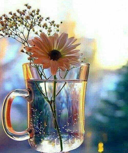 عکس پروفایل گل نرگس رنگی