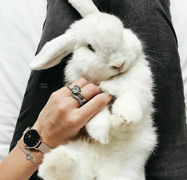 عکس پروفایل خرگوش ناز سفید