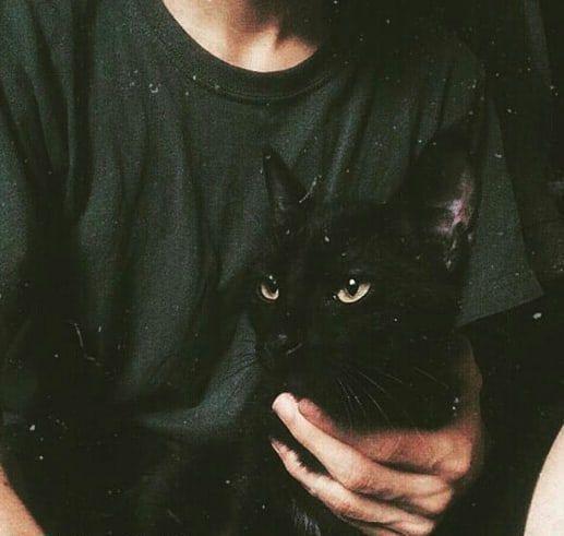 عکس پروفایل گربه سیاه | پروفایل گرام