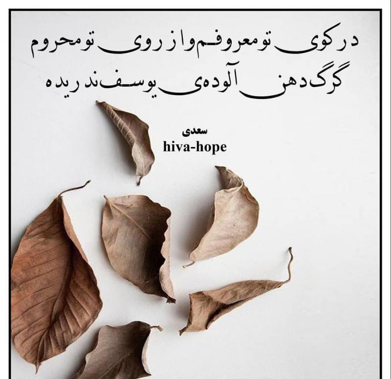 عکس پروفایل سعدی در کوی تو معروفم و از روی تو محروم گرگ دهن آلودهی یوسف ندریده