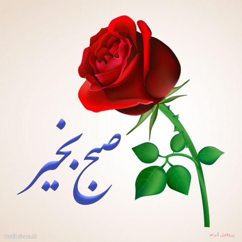 عکس صبح بخیر ساده گل قرمز
