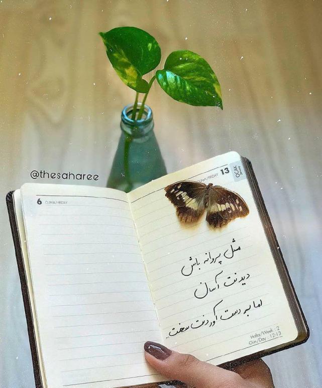 عکس پروفایل مثبت مثل پروانه باش دیدنت آسان