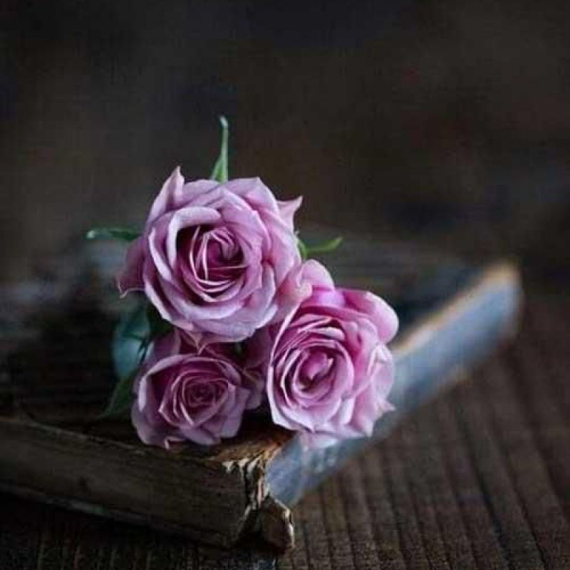 عکس پروفایل گل های صورتی و کتاب