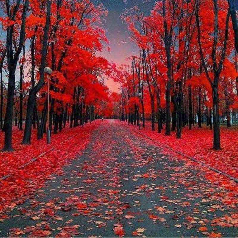 عکس پروفایل گل باغ بهار قرمز