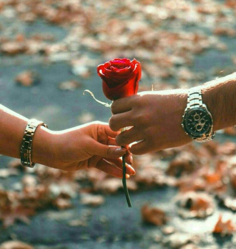 عکس پروفایل تقدیم گل سرخ عاشقانه بین 2 نفر
