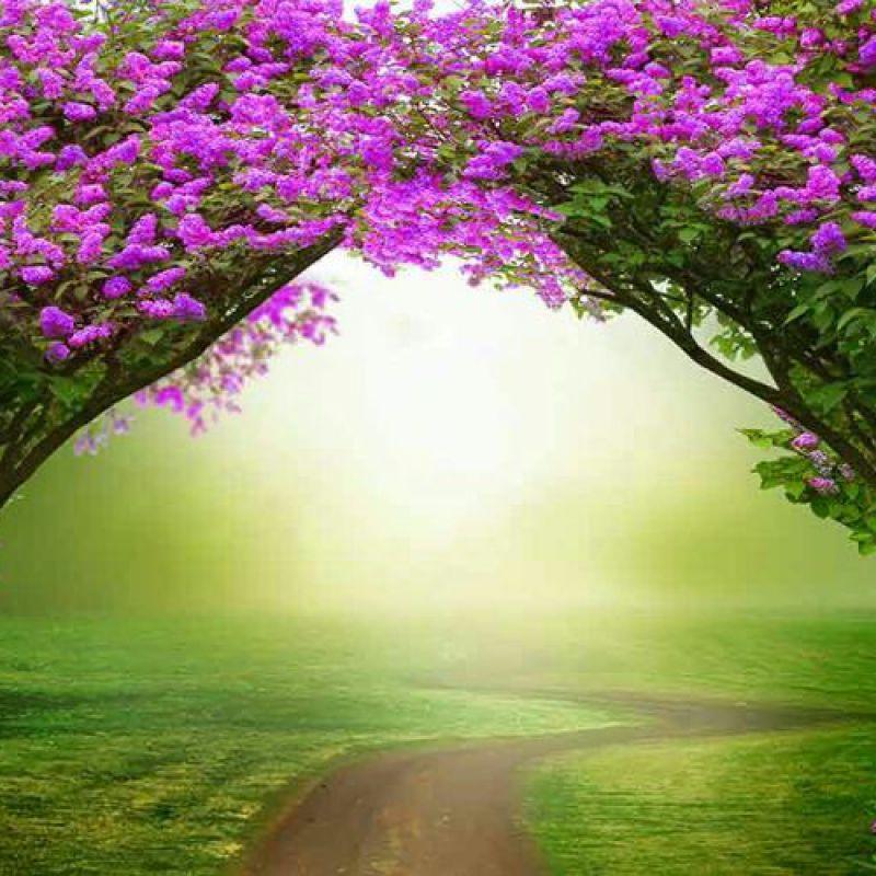 عکس پروفایل منظره زیبا بهاری با گل های بنفش و چمن زار سبز