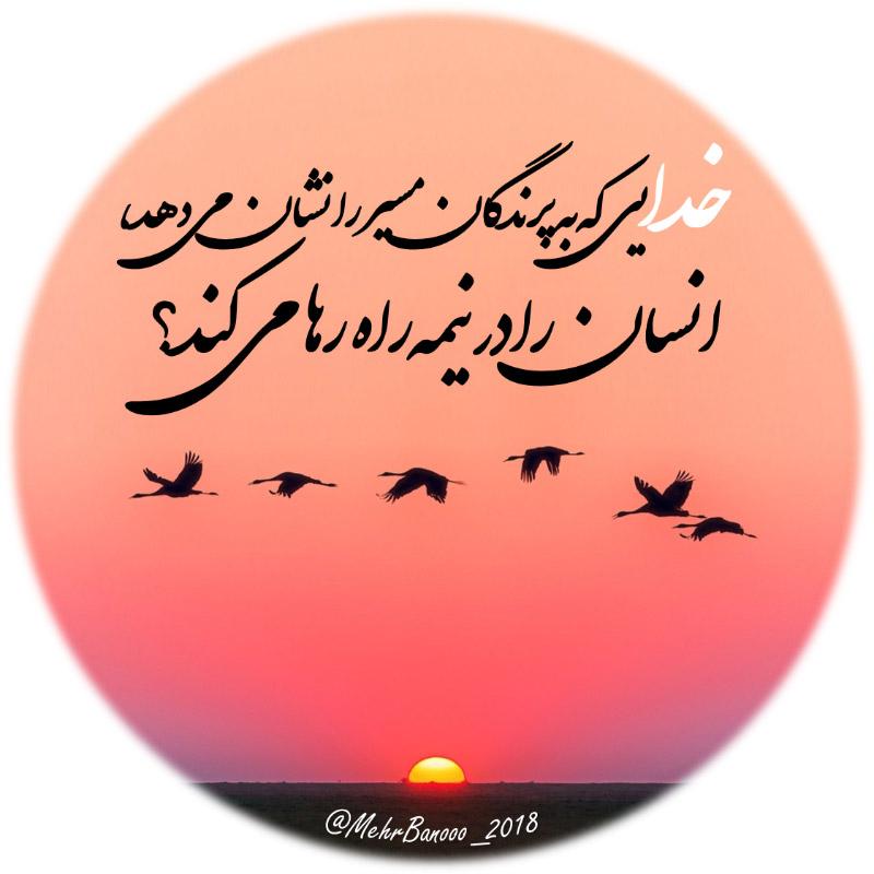 عکس پروفایل خدایی که به پرندگان مسیر را نشان می دهد