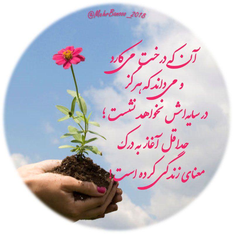عکس پروفایل آنکه درخت می کارد و می داند که هرگز در سایه اش