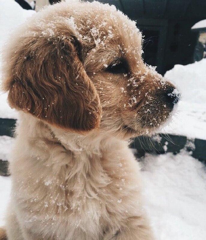 عکس پروفایل بچه سگ بامزه زیبا در برف