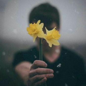 عکس پروفایل تقدیم گل زرد