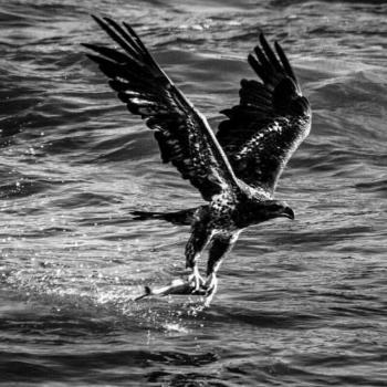 عکس پروفایل عقاب دریا