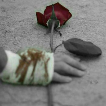عکس پروفایل گل رز برای تو