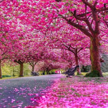 عکس پروفایل شکوفه های زیبای بهار