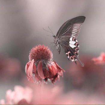 عکس پروفایل پروانه ای زیبا