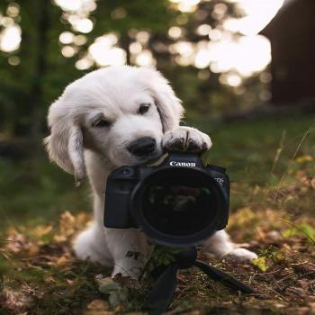عکس پروفایل سگ کوچولو عکاس