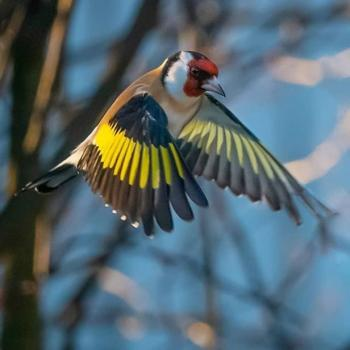 عکس پروفایل پرنده زیبا