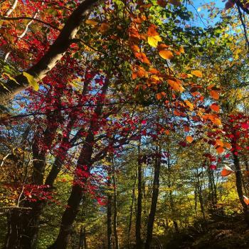 عکس پروفایل درخت های رنگی زیبا
