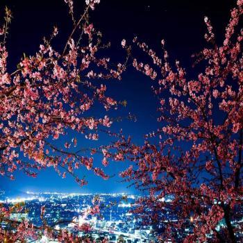 عکس پروفایل شکوفه زیبا