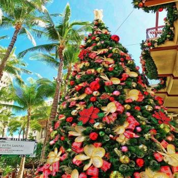 عکس پروفایل درخت کریسمس زیبا