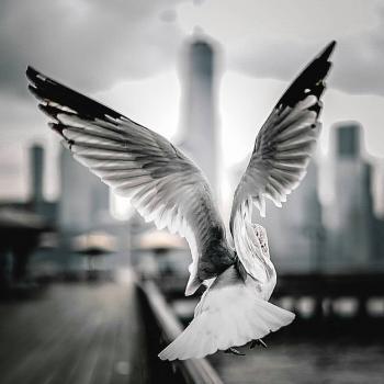 عکس پروفایل عکاسی ناب از پرنده