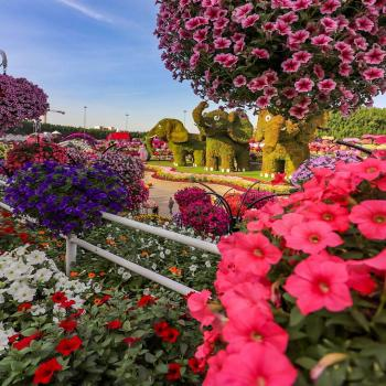عکس پروفایل باغ گل زیبا