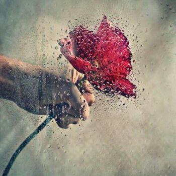 عکس پروفایل گل رز بارانی