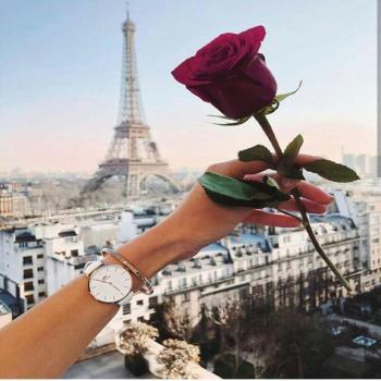 عکس پروفایل گل رز و پاریس