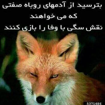 عکس پروفایل بترسید از آدمهای روباه صفت