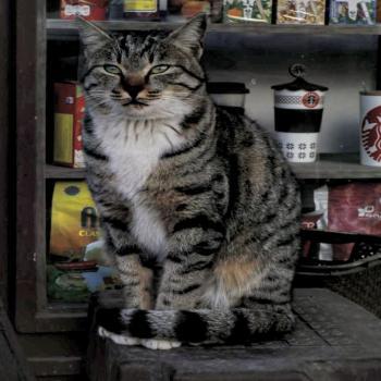 عکس پروفایل گربه بامزه