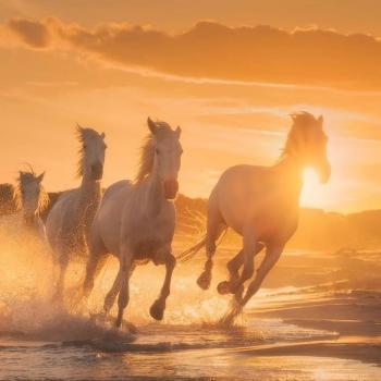 عکس پروفایل اسب زیبا