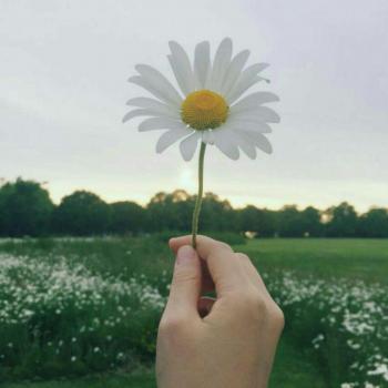 عکس پروفایل گل میخک