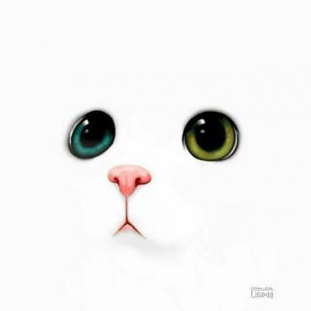 عکس پروفایل گربه ملوس فانتزی