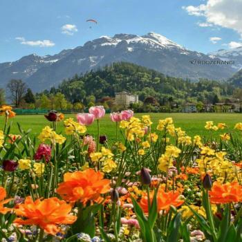 عکس پروفایل منظره کوه و گل