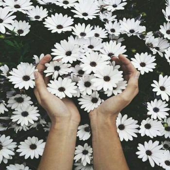 عکس پروفایل گل سفید فانتزی