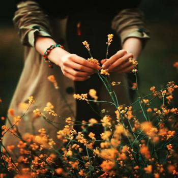 عکس پروفایل گل های نارنجی خوشگل