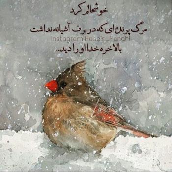 عکس پروفایل مرگ پرنده ای که آشیانه نداشت