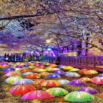 عکس پروفایل چتر های رنگی