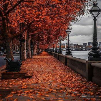 عکس پروفایل منظره پاییزی زیبا
