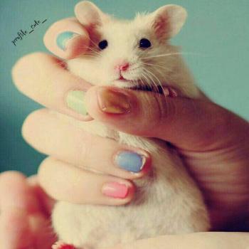 عکس پروفایل موش کوچولو ناز