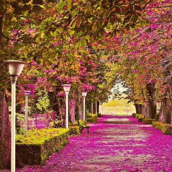 عکس پروفایل پارک پر از گل