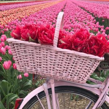 عکس پروفایل باغ گل لاله