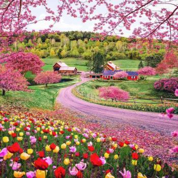 عکس پروفایل سرزمین گل های زیبا