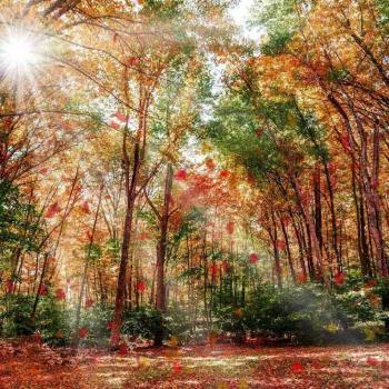 عکس پروفایل جنگل پاییزی دلنشین