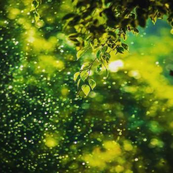 عکس پروفایل قطره های باران