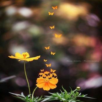 عکس پروفایل گل پروانه ای