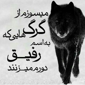 عکس پروفایل میسوزم از گرگ هایی که به اسم رفیق دورم میزنند