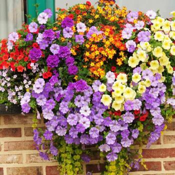 عکس پروفایل گل های رنگی
