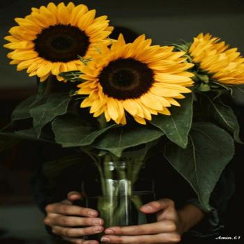 عکس پروفایل گل آفتاب گردون زیبا