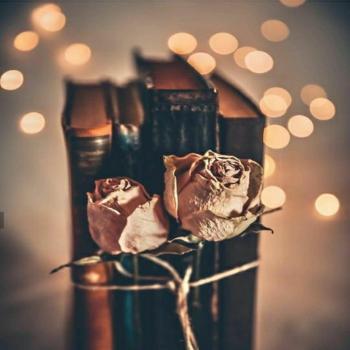 عکس پروفایل گل خشک شده
